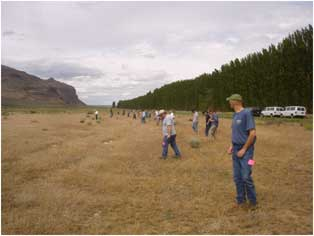 Photo of people spread across a field in a line