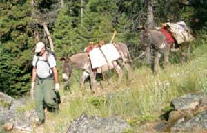 Photo of a man leading two burros that are being used as pack animals.