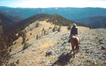 Photo of a horse and rider looking over a mountainous landscape.