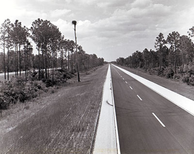 I-95 in Brevard County shows the wooded median and roadside areas preserved by the Florida Department of Transportation. The tall cypress tree in the median area is the nesting site for a family of ospreys. (photo taken by FLDOT