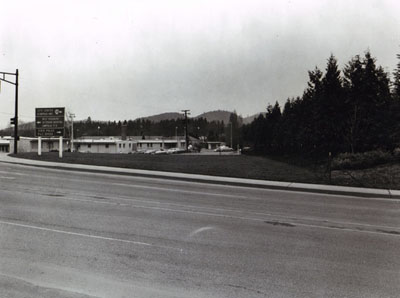 Oregon- Screen planting of Incense Cedar on fill on Interstate 5 in Roseburg.  Object - to reduce noise to hospital, left center of photograph.  Planted in 1955.  These trees are 15-18 feet high.