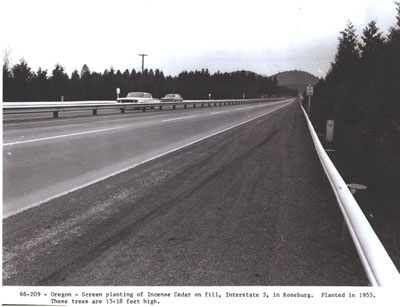 Oregon - Screen planting of Incense Cedar on fill, interstate 5, in Roseburg.  Planted in 1955.  These trees are 15-18 feet high.